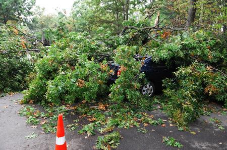 Umgestürzte Bäume auf ein Auto